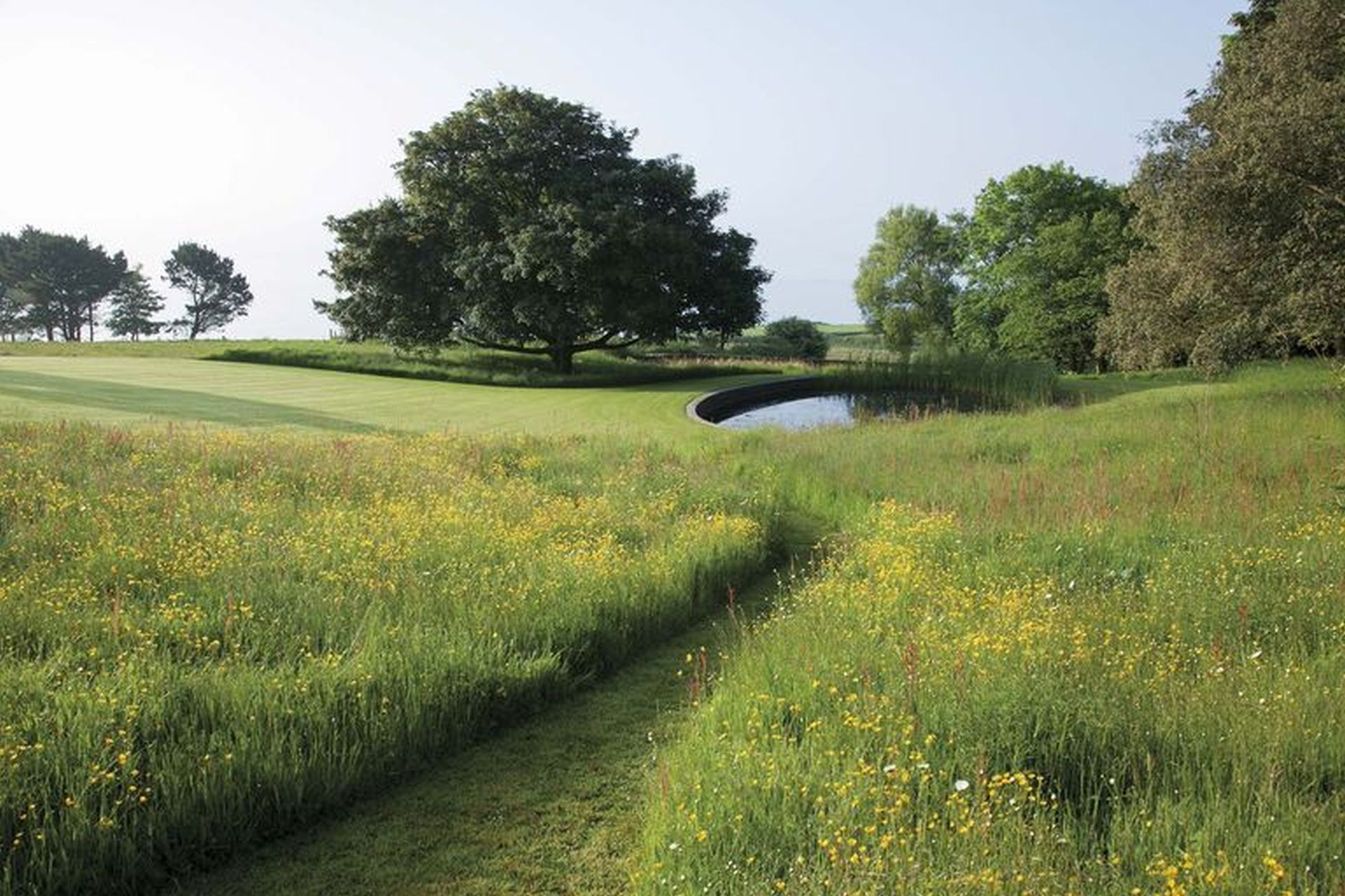 Meadow with a little high flora surrounding a road to a lake by one of the Best landscapers