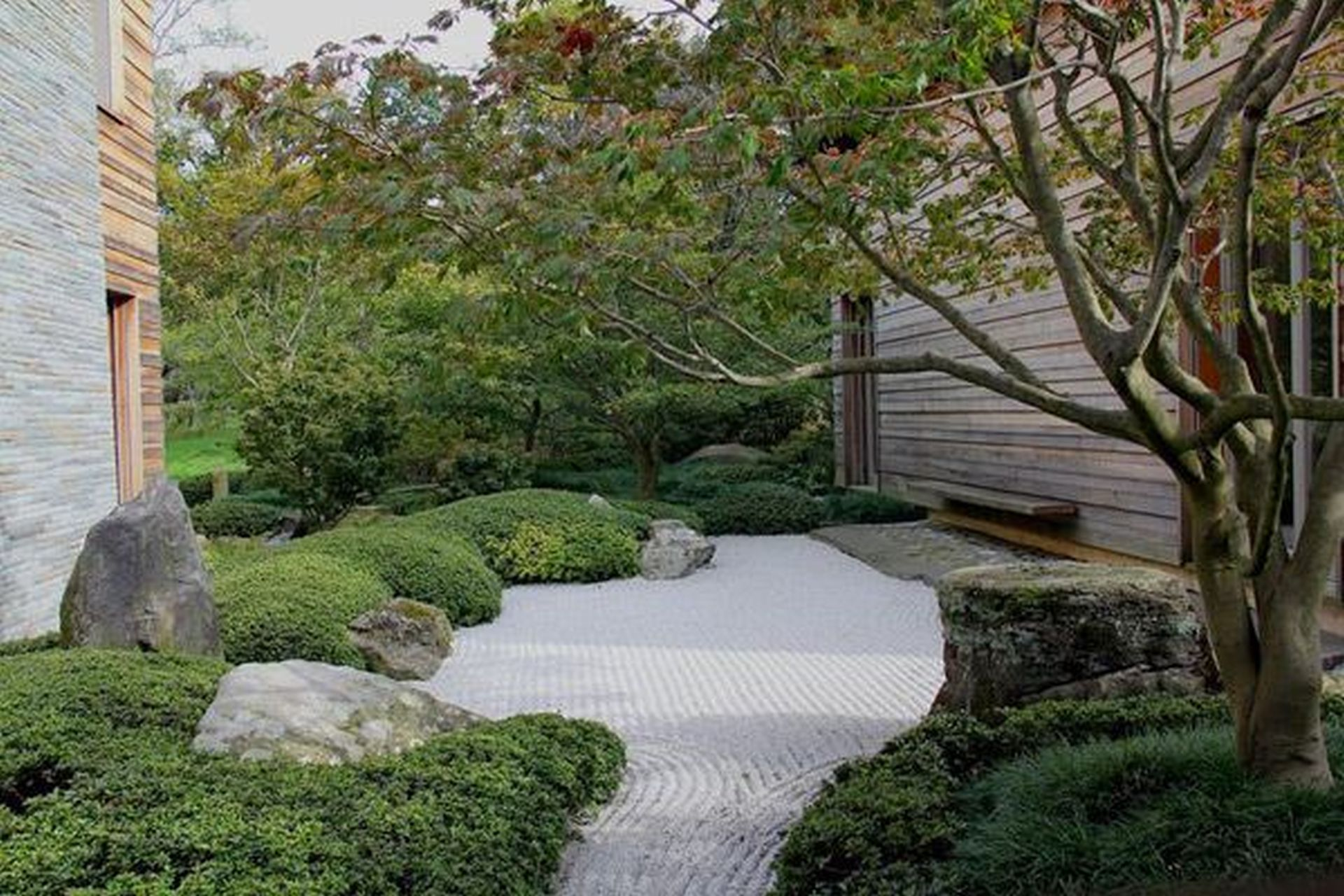 path surrounded by bushes and a couple of trees