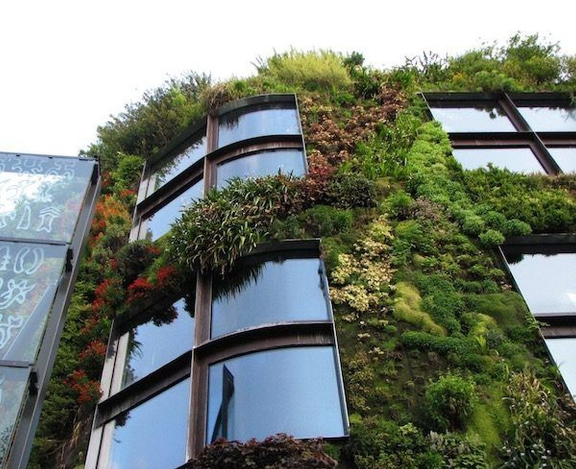 Several windows surrounded by different types of meadows. One of the Vertical gardens we love