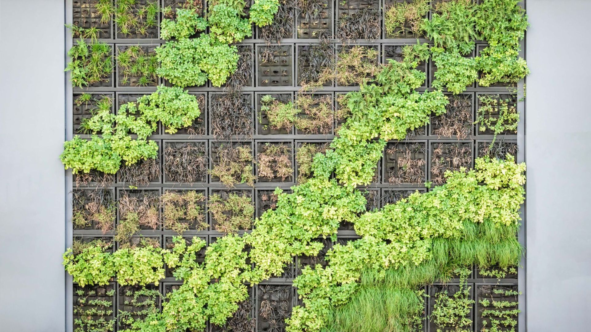 Really awesome Vertical gardens