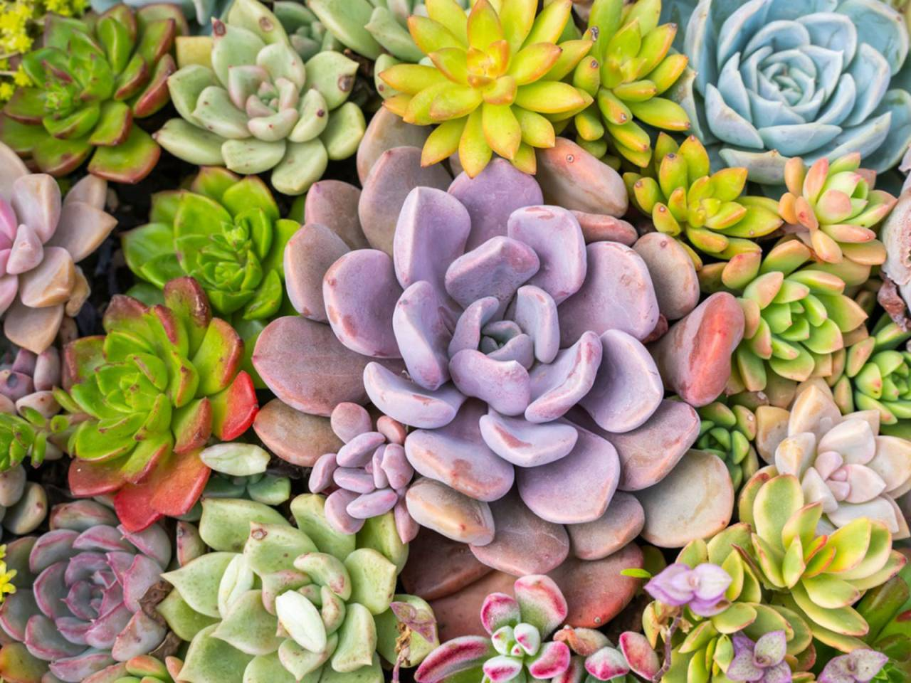 photo of several small plants of various colors